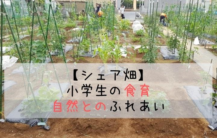 小学生の食育・自然とのふれあい シェア畑
